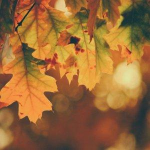 """""""Jednym z najszczęśliwszych momentów w naszym życiu jest ten, kiedy znajdujemy odwagę, by puścić to, czego zmienić nie możemy."""
